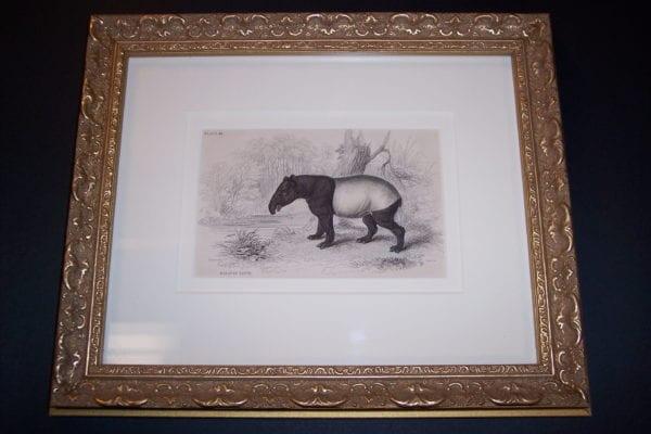 Lizar Tapir framed