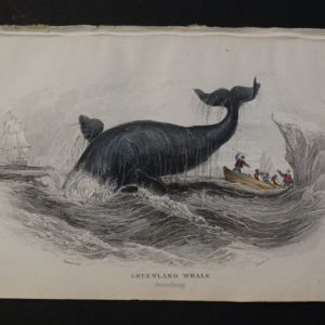 Lizar Whales Greenland Whale Pl 4 (2)