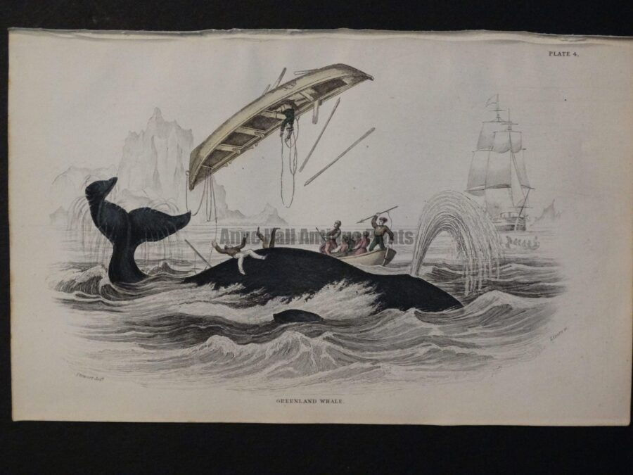 Whaling ships and whaleboats, antique hand-colored engraving, Lizar Whales Greenland Whale Pl 4.
