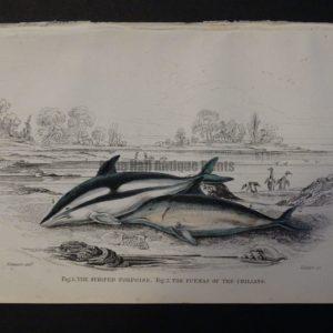 Lizar Whales Striped Porpoise Pl 22