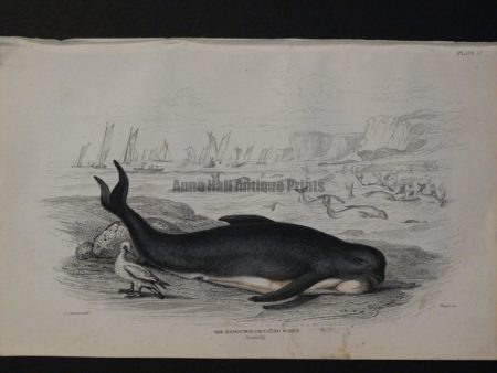 Lizar Whales The Deductor or Caing, Pl 17