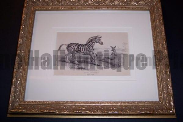 Lizar Zebra Framed