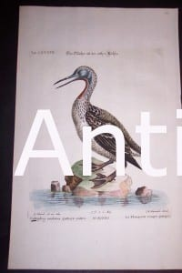 "Loon 1748 H/C Copper Plate Engraving by George Edwards, Nuremburg, 9 1/2 x 15"" #1143 400."