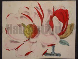 Magnolia Untitled, $75.