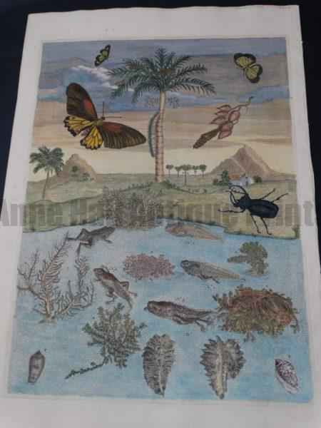 Maria Merian Frog Transformations with Palm Tree $3800.