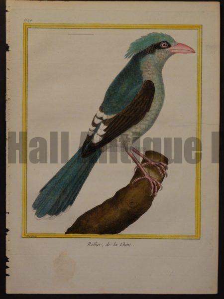 Martinet birds oiseaux engravings.  Martinet 620, Rollier, de la Chine.  Roller  $350.