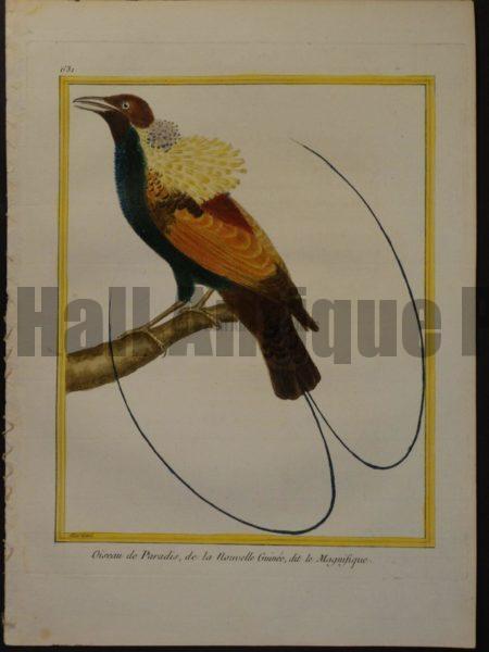 Birds of Paradise Martinet 631, Oiseau de Paradis, de la Nouvelle Guinee, dit le Magnifique.