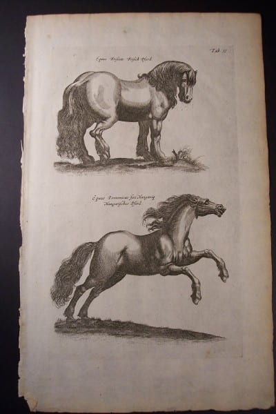 350 year old engraving or horses from Nuremburg