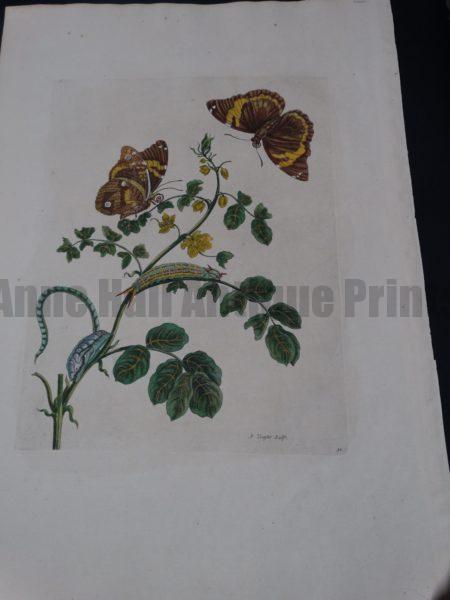Merian Insects of Surinam $1400.
