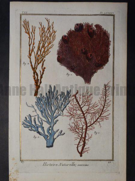 Misc Corals Pl LXXXVI Sorry Sold
