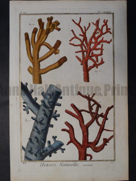 Corals Exquisite Antique Book Plate Sold