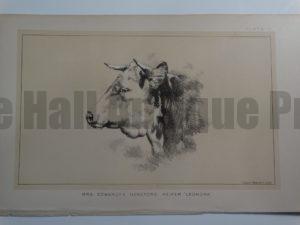 Mrs. Edwardes Hereford Heifer Leonora