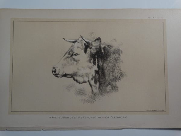an 1888 lithograph of Mrs. Edwardes Hereford Heifer Leonora