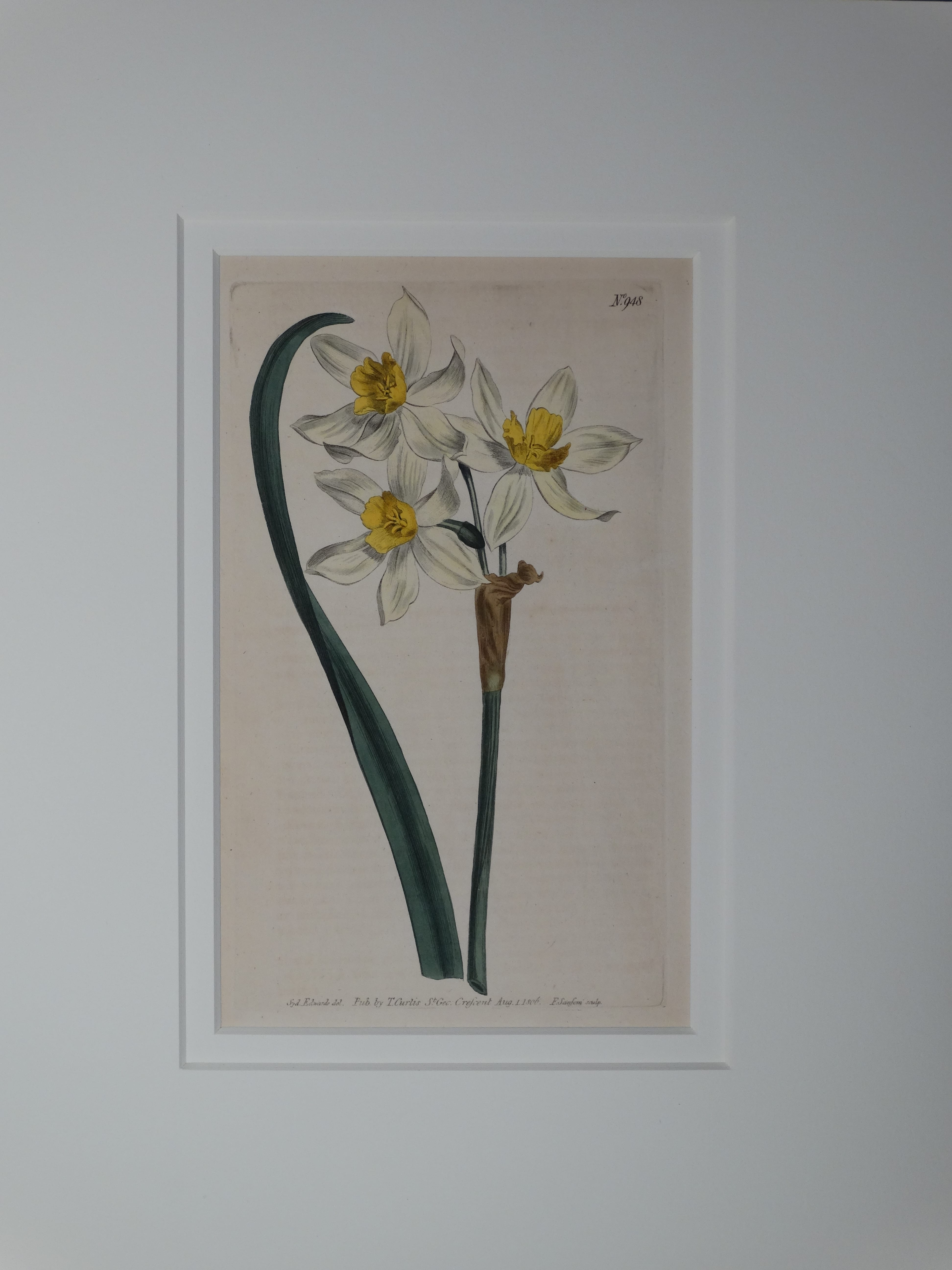 Narcissus by Curtis, #948