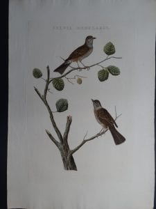 Nozeman Sylvia Modularis. Rare 18th Century Hand Colored Copper Plate Engraving on Hand Made Rag Paper.