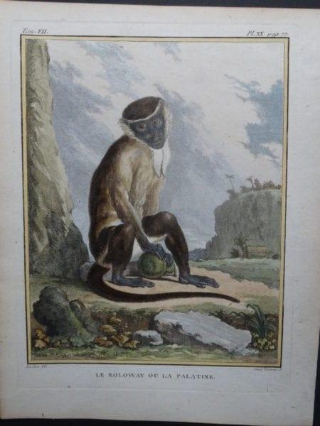 Palestine Monkey