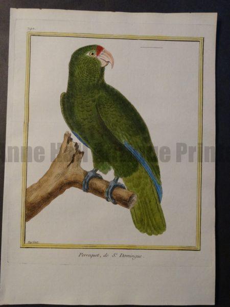 Parrot Martinet St. Dominique 792