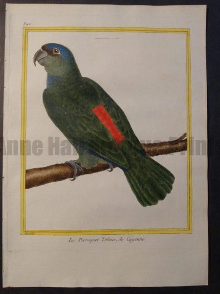Parrot Martinet Tahua