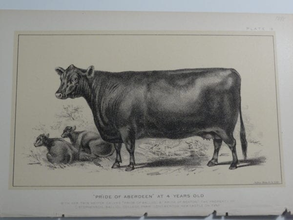 an 1888 lithograph of Pride of Aberdeen at 4 years old