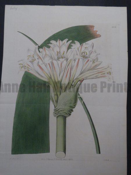 Ridgeway Hart Lily Plate 615