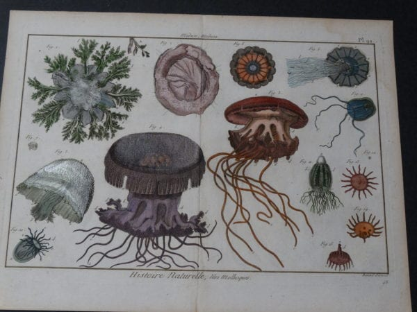 """Sea Life Jellyfish Medusa Plate 92  $325. minor staining upper right.  This rare sea life jellyfish engraving  dates 1790-1810, hand colored copperplate engraving produced in France size 11 3/4 x 15 1/2"""""""