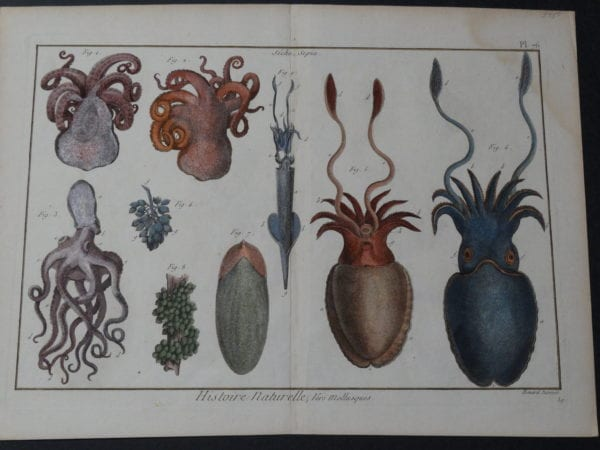 """Sea Life Octopi Squid Sepia Plate 76 $400. date 1790-1810 hand colored copperplate engraving produced in France size 11 3/4 x 15 1/2"""""""