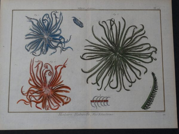 Seashells Brittle Star Plate 125 $325.date 1790-1810 hand colored copperplate engraving