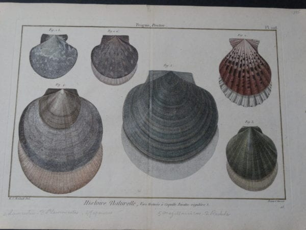Shells Scallops Plate 208 $325.date 1790-1810 hand colored copperplate engraving