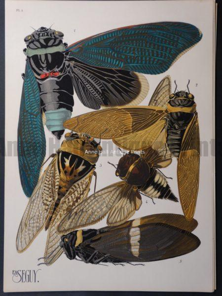Seguy Pochoir Insectes Plate 1