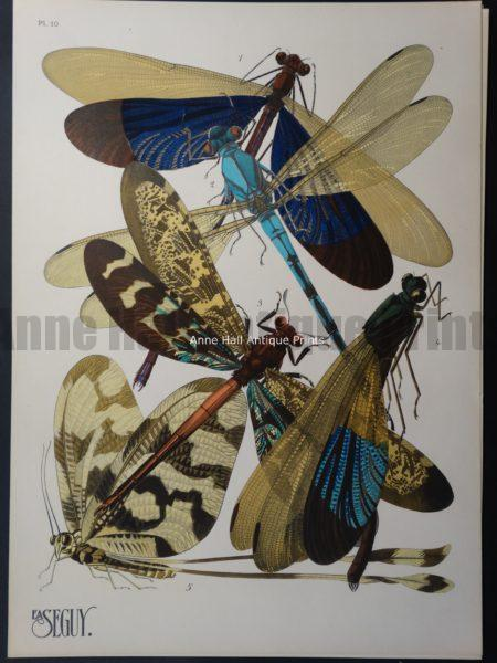 Seguy Pochoir Insectes Plate 10