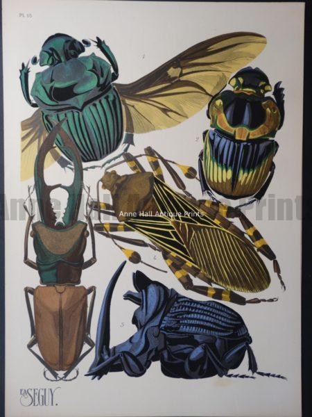 Seguy Pochoir Insectes Plate 15