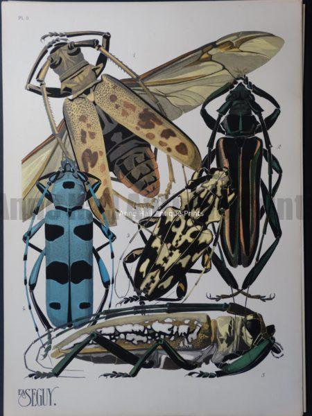 Seguy Pochoir Insectes Plate 3