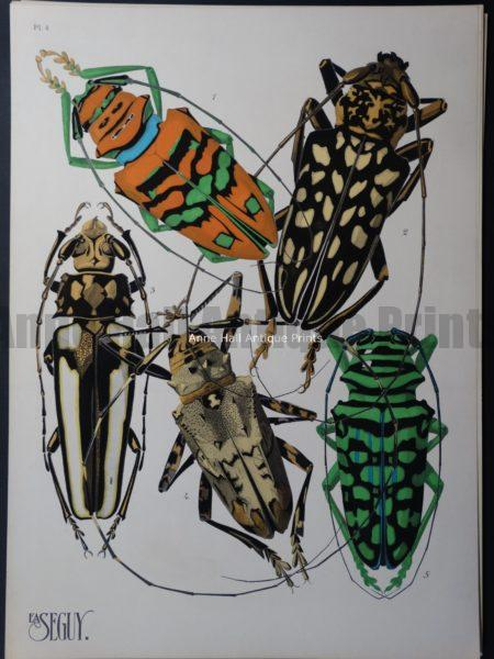 Seguy Pochoir Insectes Plate 4