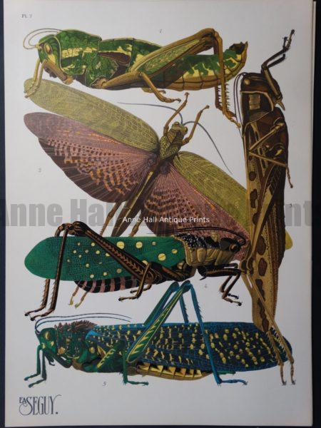 Seguy Pochoir Insectes Plate 7
