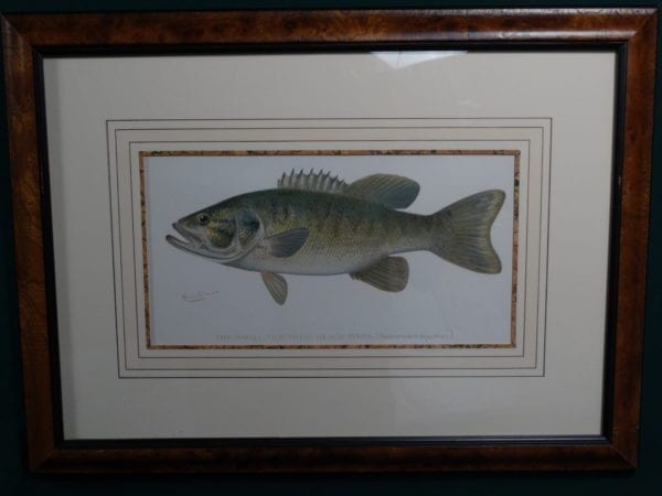 Framed Small Mouth Black Bass