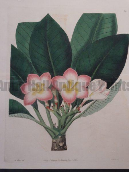 Sweet Hart Plumeria Plate 510
