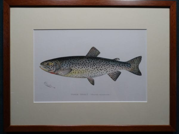 Tahoe Trout by Denton Framed $165. with free US shipping