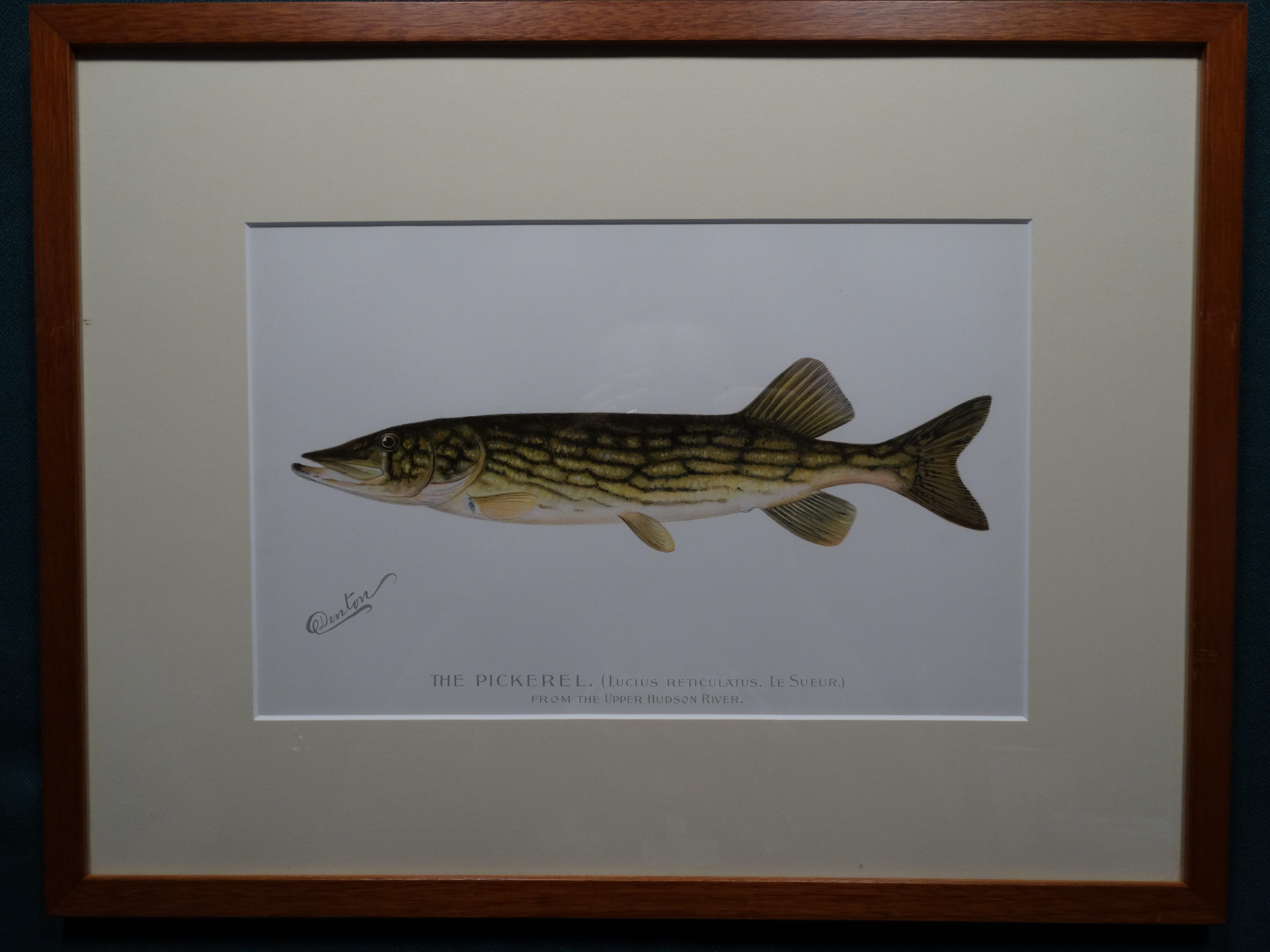 The Pickerel by Denton Framed $115. with free US shipping