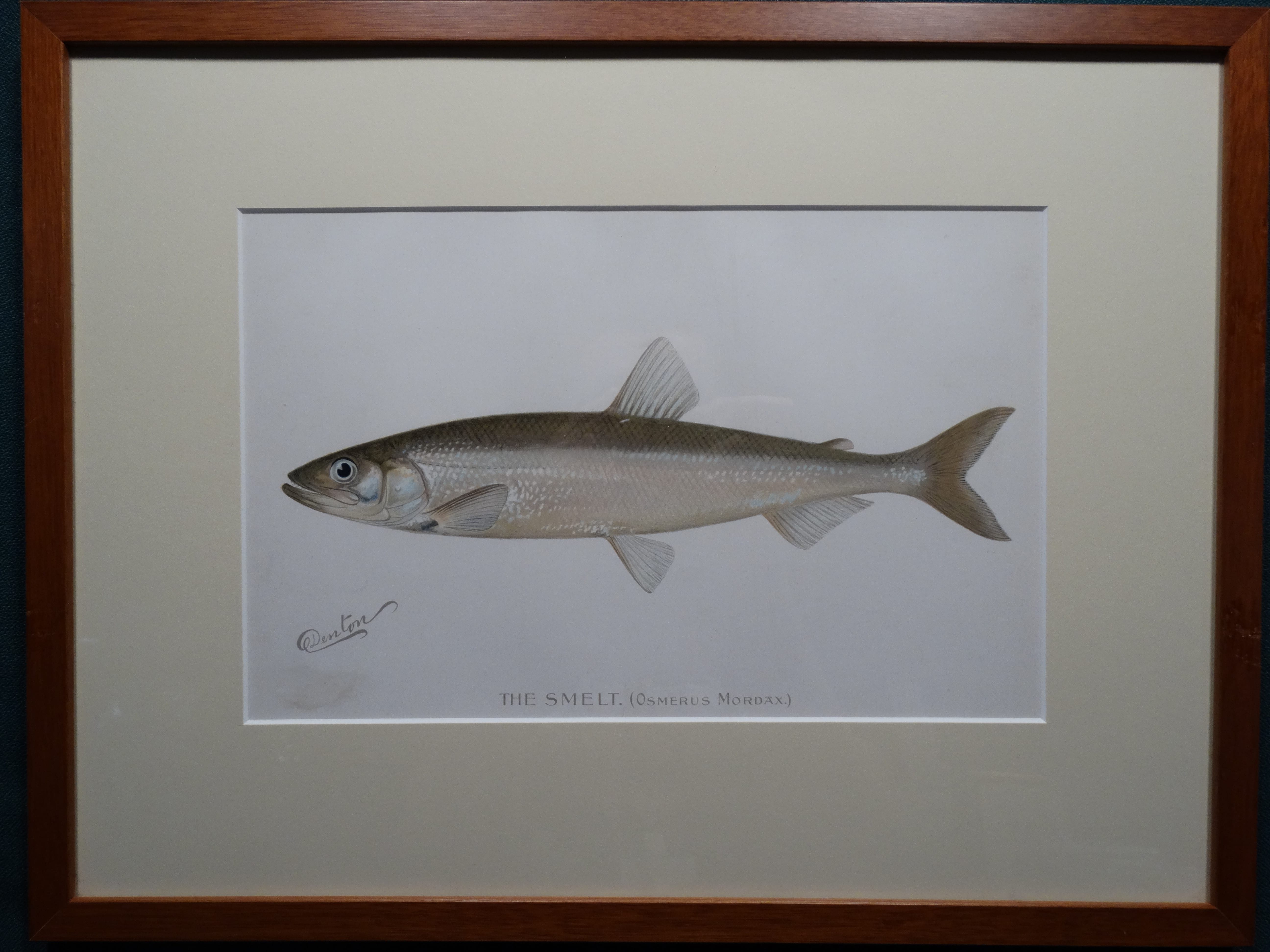 The Smelt by Denton Framed $115. with free US shipping