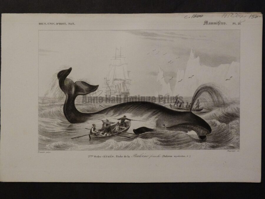 Rare depiction of whaleboat, oarsmen & harpooning a spouting baleen whale. A 170 year old engraving, highly detailed.