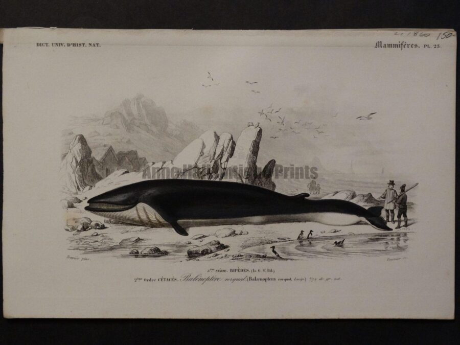 arctic whaling scene