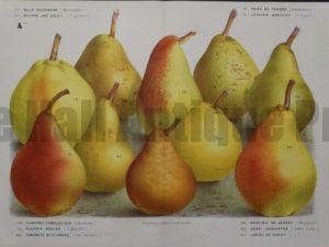 beautiful collection pears