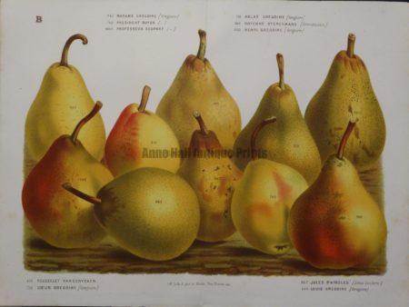 Van Houtteano Pears Pl B