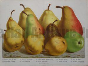 Van Houtteano Pears Pl J $245