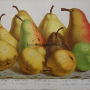 19th century pear print
