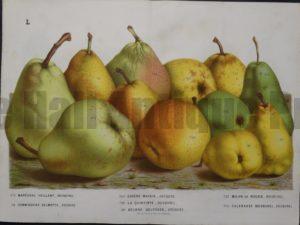 Van Houtteano Pears Pl L $245