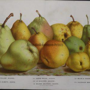 Stunning art of pears