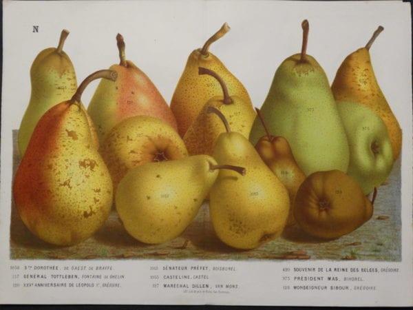 Van Houtteano Pears Pl N $245