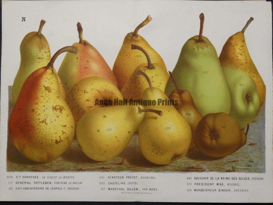 amazing classic art pears