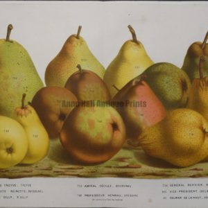original pear lithograph
